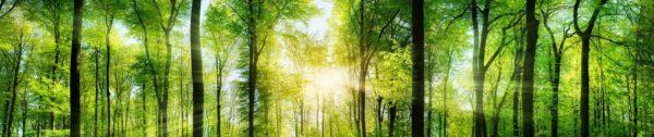 sun rays through trees